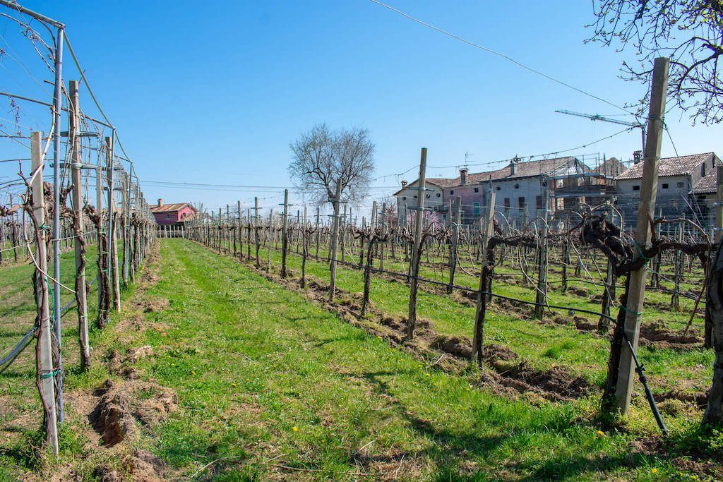 Visit prosecco Italy Vineyards De Riz Vineyards